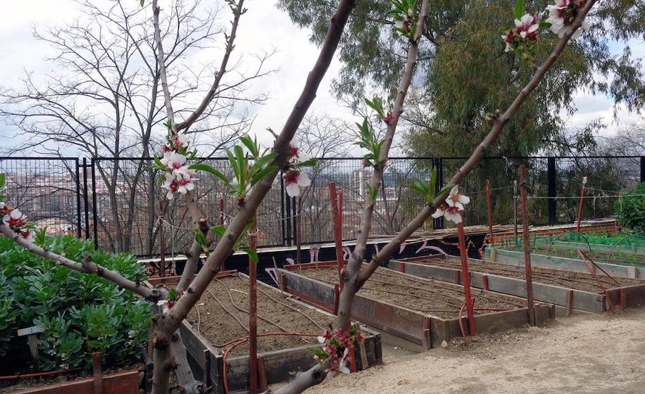 Huerto Parque de la Cornisa